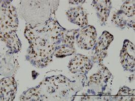Immunohistochemistry (Formalin/PFA-fixed paraffin-embedded sections) - Anti-TAF7 antibody (ab57494)