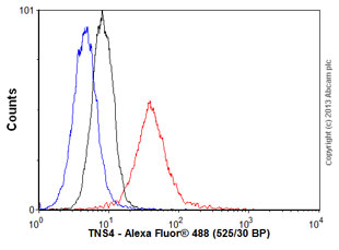 Flow Cytometry - Anti-TNS4 antibody (ab57940)