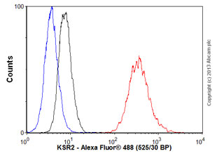 Flow Cytometry - Anti-KSR2 antibody (ab58018)