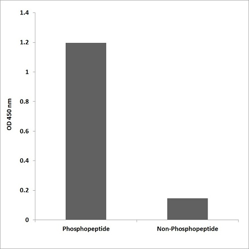 ELISA - Anti-SP1 (phospho T453) antibody - ChIP Grade (ab59257)