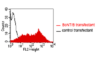 Flow Cytometry - Anti-Clostridium botulinum Toxin B  antibody [GR-3G7] (ab59715)