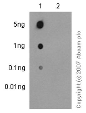 Dot Blot - Anti-Syk (phospho Y525) antibody [EP575(2)Y] (ab62350)