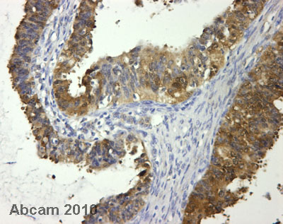 Immunohistochemistry (Formalin/PFA-fixed paraffin-embedded sections) - Anti-HINT1 antibody (ab64071)
