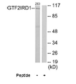 Western blot - Anti-GTF2IRD1 antibody (ab64805)