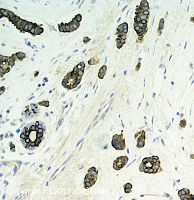 Immunohistochemistry (Formalin/PFA-fixed paraffin-embedded sections) - Anti-AZI2 antibody (ab65242)