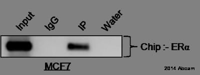 ChIP - Anti-Estrogen Receptor alpha antibody [C-542] - ChIP Grade (ab66102)