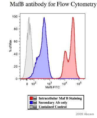 Flow Cytometry - Anti-MafB antibody (ab66506)