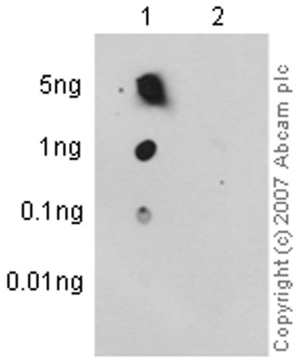 Dot Blot - Anti-Acetyl Coenzyme A Carboxylase (phospho S79) antibody [EP1885Y] (ab68191)