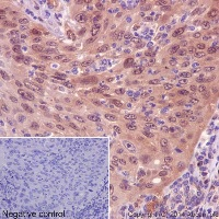 Immunohistochemistry (Formalin/PFA-fixed paraffin-embedded sections) - Anti-IRF3 antibody [EPR2418Y] (ab68481)
