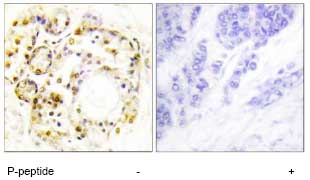 Immunohistochemistry (Formalin/PFA-fixed paraffin-embedded sections) - Anti-MAPK6 (phospho S189) antibody (ab74032)
