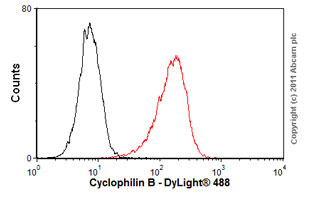 Flow Cytometry - Anti-Cyclophilin B antibody [k2E2] (ab74173)
