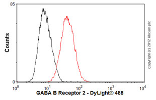 Flow Cytometry-Anti-GABA B Receptor 2 antibody [EP2411Y](ab75838)
