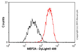 Flow Cytometry - Anti-MEF2A antibody [EP1706Y] (ab76063)