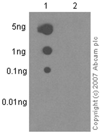Dot Blot - Anti-VAV1 (phospho Y174) antibody [EP510Y] (ab76225)
