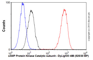 Flow Cytometry - Anti-cAMP Protein Kinase Catalytic subunit antibody [EP2102Y] (ab76238)
