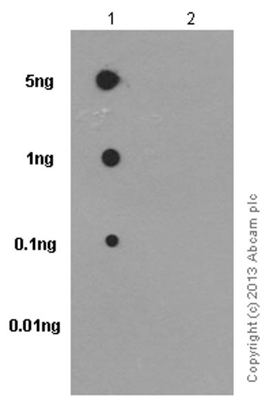 Dot Blot - Anti-Ezrin (phospho Thr567)/ Radixin (phospho Thr564)/ Moesin (phospho Thr558) antibody [EP2122Y] (ab76247)
