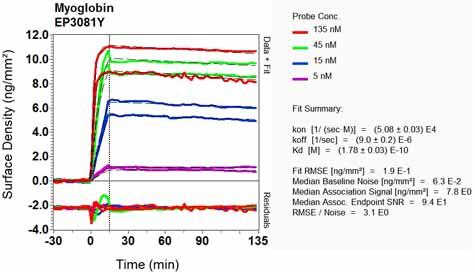 Other - Anti-Myoglobin antibody [EP3081Y] (ab77232)