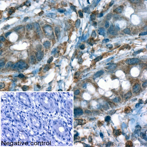 Immunohistochemistry (Formalin/PFA-fixed paraffin-embedded sections) - Anti-beta Actin antibody - Loading Control (ab8229)