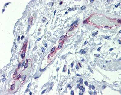 Immunohistochemistry (Formalin/PFA-fixed paraffin-embedded sections) - Anti-EHD4 antibody (ab83859)