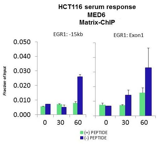ChIP - Anti-MED6 antibody (ab84968)