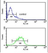 Flow Cytometry - Anti-ALS antibody (ab85222)