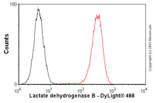 Flow Cytometry-Anti-Lactate Dehydrogenase B antibody [60H11](ab85319)
