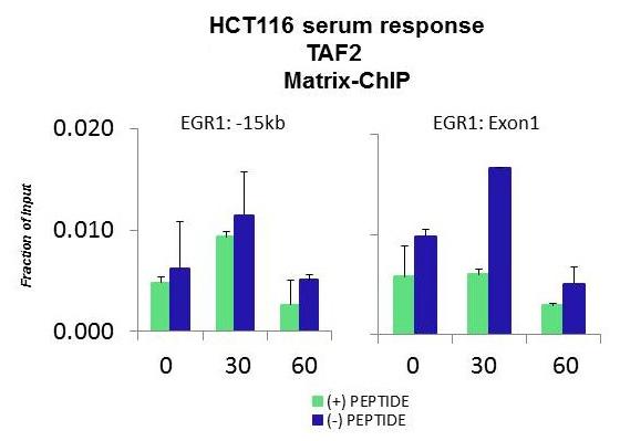 ChIP - Anti-TAF2 antibody (ab86327)