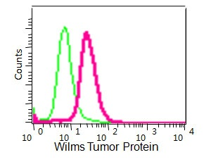 Flow Cytometry - Anti-Wilms Tumor Protein antibody [CAN-R9(IHC)-56-2] (ab89901)