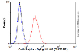 Flow Cytometry - Anti-CaMKII alpha  antibody [EPR1828] (ab92332)