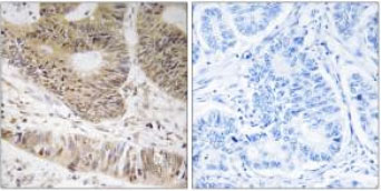 Immunohistochemistry (Formalin/PFA-fixed paraffin-embedded sections) - Anti-RFX3 antibody (ab92670)