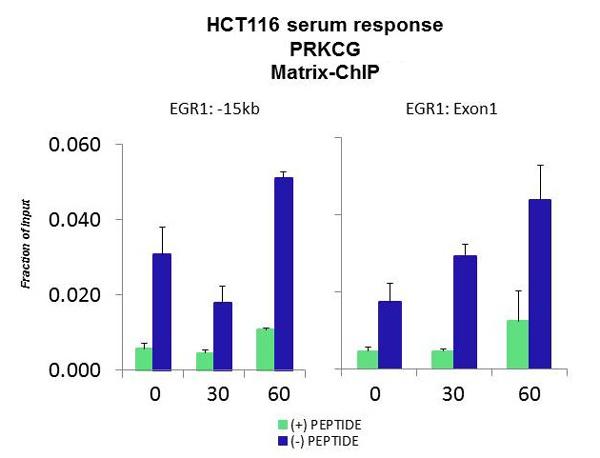 ChIP - Anti-PKC gamma antibody (ab94614)