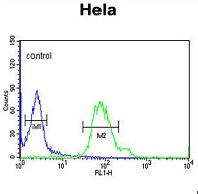 Flow Cytometry - Anti-GABARAPL1 antibody (ab94996)
