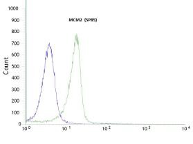 Flow Cytometry - Anti-MCM2 antibody [SP85], prediluted (ab95362)