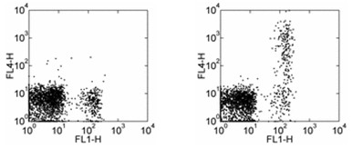 Flow Cytometry - Anti-CD23 antibody [EBVCS2] (Allophycocyanin) (ab95573)