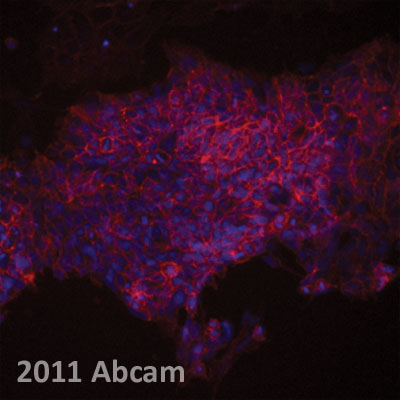 Immunocytochemistry/ Immunofluorescence - Anti-NOTCH3 antibody [HMN3-133] (Phycoerythrin) (ab95775)